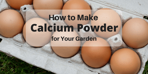 How to Give Your Garden a Calcium Boost