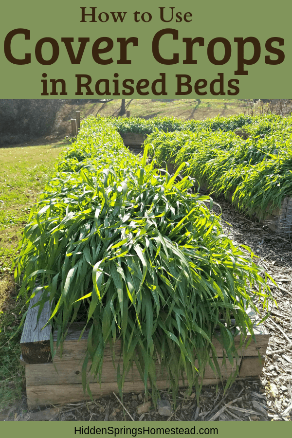 How to use cover crops in raised beds hidden springs - Cover crops for vegetable gardens ...