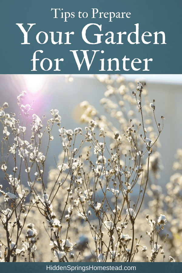 Prepare Garden for Winter. Dry fall stems covered with frost.