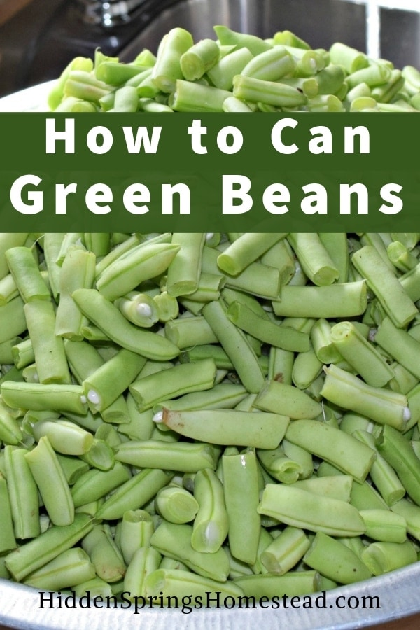 broken green beans ready to be canned. Canning Green Beans. Hidden Springs Homestead