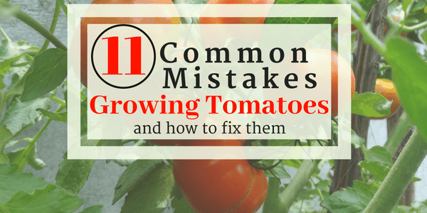 Cover page for Common Mistakes Growing Tomatoes on FB