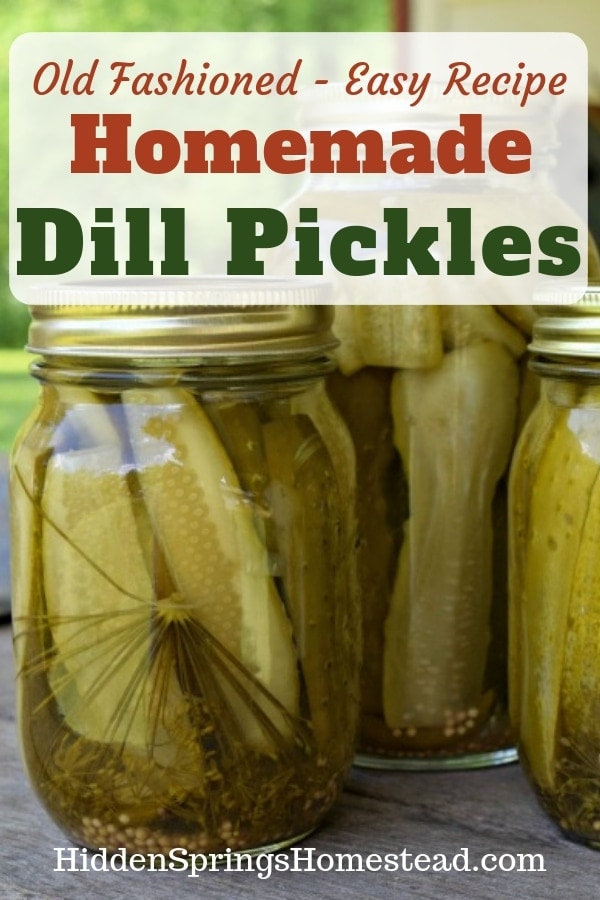 Dill Pickles in a Jar. How to Can Dill Pickles. Hidden Springs Homestead