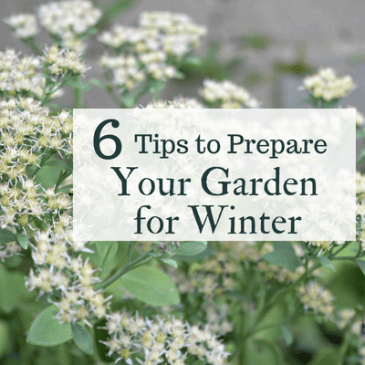 Prepare Garden for Winter