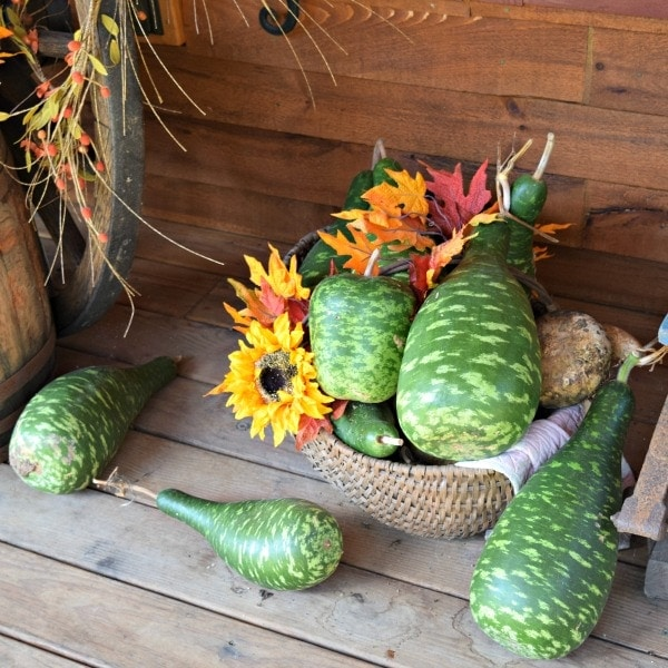 Fall gourds, old basket and sunflower heads make a festive fall porch decor
