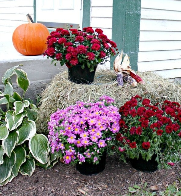Fall porch decor in a country them. This simple and easy yet beautiful fall porch decor by the entrance is just a welcome sign into your home. decorating with natural elements, like hay bales, Indian Corn, orange pumpkins. You can cozy up your fall porch decor very easily and simple.