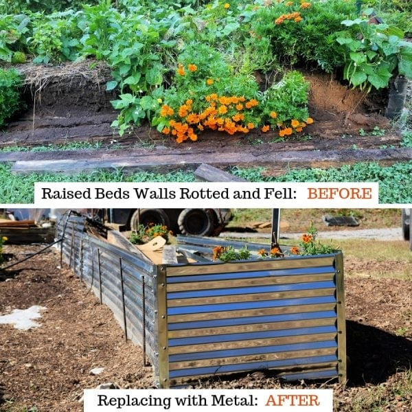 raised bed walls that fell on top and the replaced with metal on the bottom.. Becoming more Self reliant. Hidden Springs Homestead