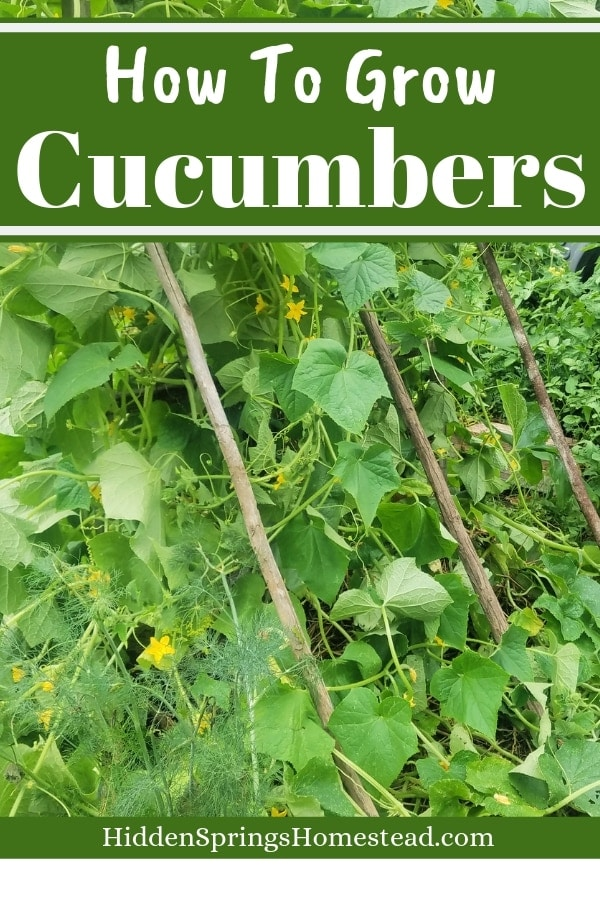 How To Grow Cucumbers Plant Grow And Harvest Hidden Springs